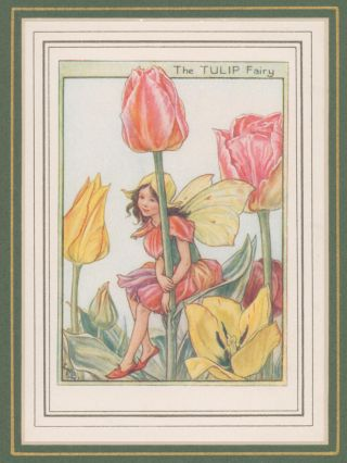 The Tulip Fairy [Flower Fairies mounted colour plate]. Cicely Mary BARKER