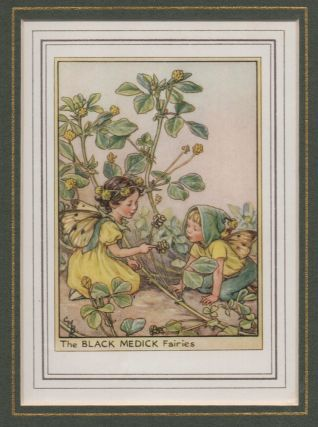 The Black Medick Fairy [Flower Fairies mounted colour plate]. Cicely Mary BARKER