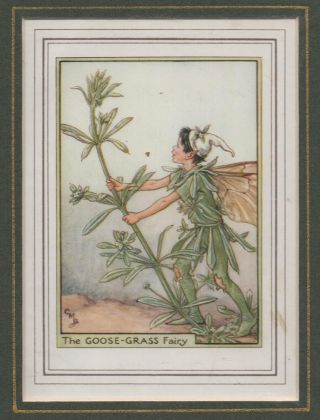 The Goose-Grass Fairy [Flower Fairies mounted colour plate]. Cicely Mary BARKER