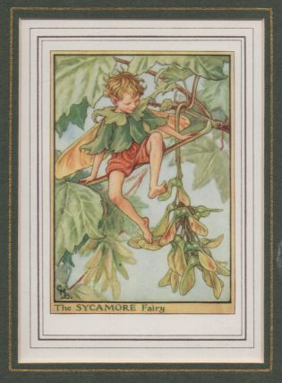 The Sycamore Fairy [Flower Fairies mounted colour plate]. Cicely Mary BARKER